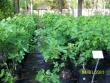 crestview-nurseries-nc-i-176