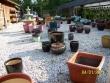 crestview-nurseries-nc-i-185