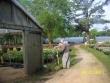 crestview-nurseries-nc-i-201