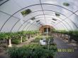 crestview-nurseries-nc-i-236