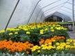 crestview-nurseries-nc-i-242