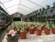crestview-nurseries-nc-i-309