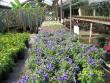 crestview-nurseries-nc-i-310