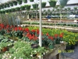 crestview-nurseries-nc-i-311