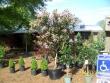 crestview-nurseries-nc-i-315